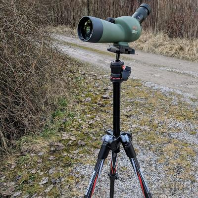 KOWA Mini-Spektiv TSN-501 50 mm Schrägeinblick Set mit BEFREE Carbon Stativ